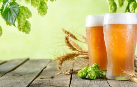 Élaboration d'une bière artisanale unique à la brasserie des Faux à Louvois